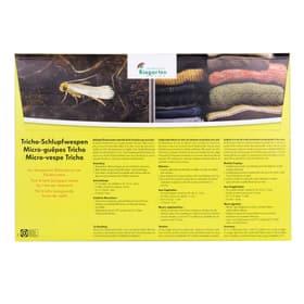 Schlupfwespen gegen Kleidermotten, 8 x 1 Karte Nützlinge Andermatt Biogarten 658519600000 Bild Nr. 1