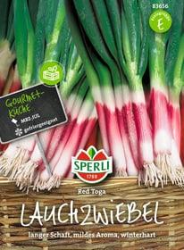 Lauchzwiebeln Red Toga Semences de legumes Sperli 650155500000 Photo no. 1
