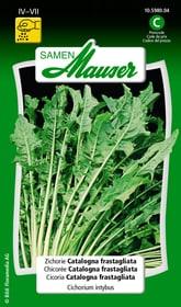 Chicorée Catalogna frastagliata Semences de legumes Samen Mauser 650116401000 Contenu 2.5 g (env. 200 plantes ou 5 - 8 m²) Photo no. 1
