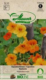 Nasturzio Sementi di fiori Samen Mauser 650245000000 N. figura 1