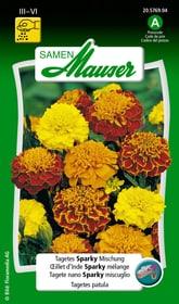 Tagetes Sparky Mischung Blumensamen Samen Mauser 650107510000 Inhalt 1 g (ca. 80 Pflanzen oder 5 m²) Bild Nr. 1