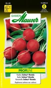 Radies Selma®-Ronda Gemüsesamen Samen Mauser 650113607000 Inhalt 3 g (ca. 2 - 3 m²) Bild Nr. 1