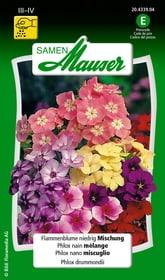 Phlox nano miscuglio Sementi di fiori Samen Mauser 650106401000 Contenuto 0.75 g (ca. 75 piante o 3 - 4 m²) N. figura 1