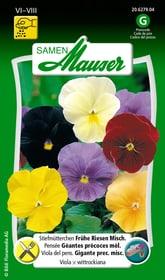 Stiefmütterchen Fruehe Riesen Misch. Blumensamen Samen Mauser 650108002000 Inhalt 200 Korn (ca. 100 Pflanzen oder 3 - 5 m²) Bild Nr. 1