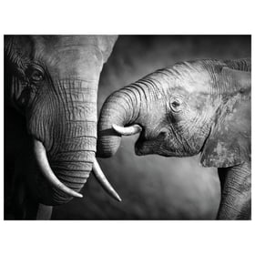 BLACK & WHITE Poster 431817430451 Dimensions L: 40.0 cm x P: 0.1 cm x H: 30.0 cm Photo no. 1