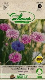 Kornblume Farbmischung Blumensamen Samen Mauser 650245300000 Bild Nr. 1