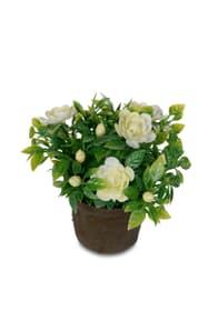 Fiore artificiale mini Do it + Garden 657098200007 Couleur Blanc Taille ø: 9.0 cm x H: 12.0 cm Photo no. 1