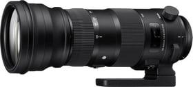 150-600mm F/5.0-6.3 DG OS HSM Sport pour Nikon Objectif Sigma 785300126182 Photo no. 1