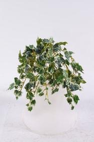 Efeu Kunstpflanze 657353800025 Farbe Grün Grösse L: 25.0 x B: 18.0 Bild Nr. 1