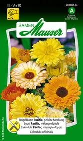 Ringelblume Pacific, gefüllte Misch. Blumensamen Samen Mauser 650101902000 Inhalt 1 g (ca. 50 Pflanzen oder 3 - 4 m² ) Bild Nr. 1
