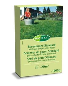 Semence de gazon Standard, 600 g