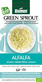 Sementi Germogli Alfalfa 40g Sementi germogliati Blumen 650237500000 N. figura 1