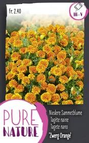 Tagete nano 'Nano arancione', doppio 0.7 Sementi di fiori Do it + Garden 287304000000 N. figura 1