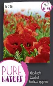 Klatschmohn, leuchtenrot 0.5g Blumensamen Do it + Garden 287305800000 Bild Nr. 1