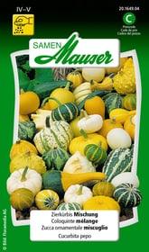Zierkürbis Mischung Blumensamen Samen Mauser 650102904000 Inhalt 2.5 g (ca. 20 Pflanzen oder 8 - 10 m²) Bild Nr. 1