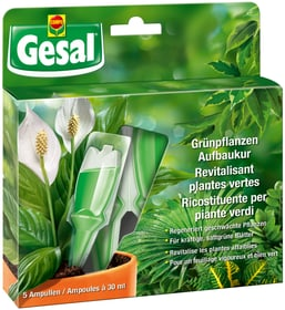Grünpflanzen Aufbaukur, 5 x 30 ml Flüssigdünger Compo Gesal 658234100000 Bild Nr. 1