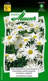 Wiesen-Wucherblume, Grosse Margerite Blumensamen Samen Mauser 650102301000 Inhalt 0.75 g (ca. 50 Pflanzen oder 5 - 6 m²) Bild Nr. 1