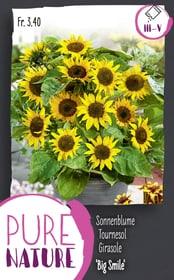 Sonnenblume 'Big Smile' 2g Blumensamen Do it + Garden 287303100000 Bild Nr. 1