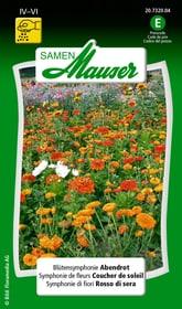 Blütensymphonie Abendrot Blumensamen Samen Mauser 650101601000 Inhalt 5 g (ca 3 m²) Bild Nr. 1