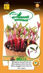 BIO-Micro-risciò Rubino Rosso Sementi di gourmet Samen Mauser 650161100000 N. figura 1