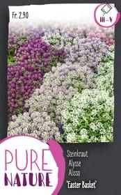 Steinkraut 'Easter Basket', Mix 0.25g Blumensamen Do it + Garden 287303500000 Bild Nr. 1