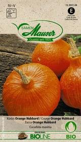 ZUCCA ORANGE HUBBARD Sementi di verdura Samen Mauser 650174700000 N. figura 1