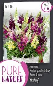 Antirrhinum Halbhohes Löwenmaul M. 0.5g Blumensamen Do it + Garden 287300600000 Bild Nr. 1