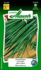 Aglio da tagliare Sementi di erbe Samen Mauser 650114701000 Contenuto 1 g (ca. 1 m²) N. figura 1