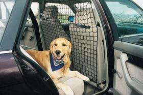Filet de sécurité pour voiture