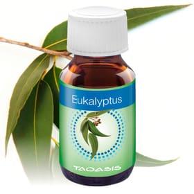 Duftöl Eukalyptus 3x 50 a ml