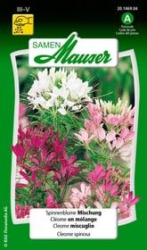 Spinnenblume Mischung Blumensamen Samen Mauser 650102501000 Inhalt 1 g (ca. 100 Pflanzen oder 5 m²) Bild Nr. 1
