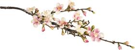 FIORI DI MELO Fleur artificielle 440727800000 N. figura 1