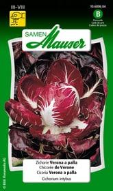 Zichorie Verona a palla Gemüsesamen Samen Mauser 650116406000 Inhalt 5 g (ca. 3 - 4 m²) Bild Nr. 1