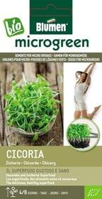 Micro ortaggi Cicoria 10g Sementi di gourmet Blumen 650243300000 N. figura 1