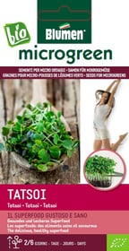 Micro ortaggi Tatsoi 20g Sementi di gourmet Blumen 650243000000 N. figura 1