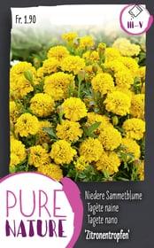 Nied.Sammetblume 'Zitronentropfen' 0.75g Blumensamen Do it + Garden 287304100000 Bild Nr. 1