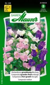 Glockenblume grossblumige Mischung Blumensamen Samen Mauser 650103901000 Inhalt 0.5 g (ca. 100  Pflanzen oder 5 m² ) Bild Nr. 1
