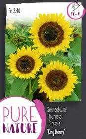 Sonnenblume 'King Henry' 2.5g Blumensamen Do it + Garden 287303200000 Bild Nr. 1