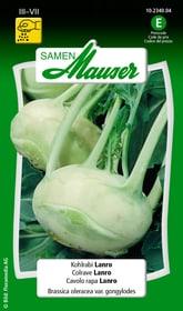 Colrave Lanro Semences de legumes Samen Mauser 650111403000 Contenu 1 g (env. 80 - 100 plantes ou 5 - 6 m²) Photo no. 1