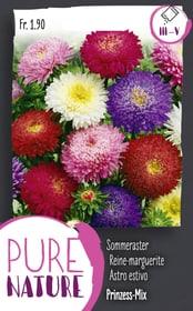 Astro estivo 'Principessa', miscuglio 1g Sementi di fiori Do it + Garden 287302300000 N. figura 1