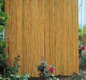 Écran en bambou