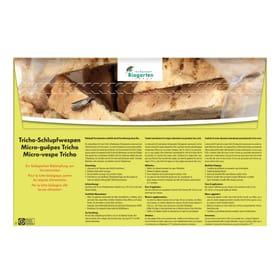 Schlupfwespen gegen Vorratsmotten, 4x6 Nützlinge Andermatt Biogarten 658520100000 Bild Nr. 1