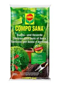 Buchs- und Ilexerde, 20 l Spezialerde Compo Sana 658113700000 Bild Nr. 1