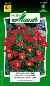 Kalifornischer Mohn  Dalli Blumensamen Samen Mauser 650103601000 Inhalt 0.25 g (ca. 100 Pflanzen oder 5 m²) Bild Nr. 1