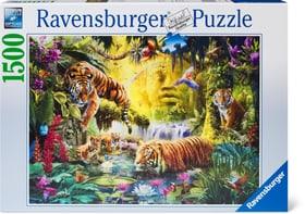 Puzzle Tigres au plan d'eau 1500 Ravensburger 748988900000 Photo no. 1
