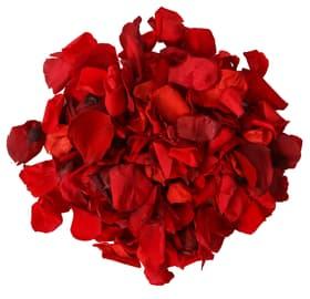 Petalo di rosa, 150pcs. Do it + Garden 656548200001 Colore Rosso N. figura 1