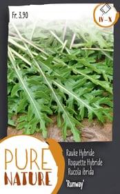 Rucola ibrida 'Runway' 3g Sementi di verdura Do it + Garden 287112200000 N. figura 1