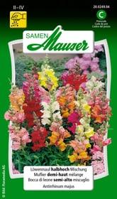 Löwenmaul halbhohe Mischung Blumensamen Samen Mauser 650101001000 Inhalt 0.5 g (ca. 100 Pflanzen oder 4 m² ) Bild Nr. 1