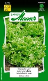 Lattuga Batavia Leny Sementi di verdura Samen Mauser 650108801000 Contenuto 0.15 g (ca. 80 piante o 6 - 10 m²) N. figura 1