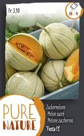 Melone zuccherino 'Fiesta F1' 10 Korn Sementi di verdura Do it + Garden 287117400000 N. figura 1
